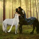 sentör centaur düğünü